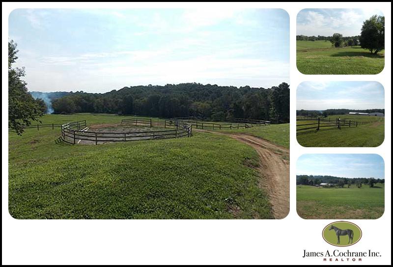 Springdale farm3_0019